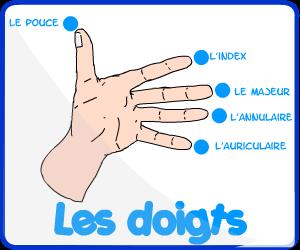 Les noms des doigts