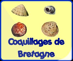 Coquillages de Bretagne